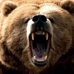 Are you a bear to work with? Workplace Conflict in the Veterinary Office