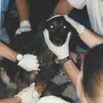 September 11th 2001 Part IV:  An Invitation to Treat Rescue Dogs on 'The Pile'