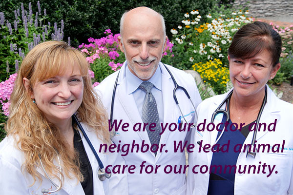 Create A Mission Statement for Your Veterinary Practice